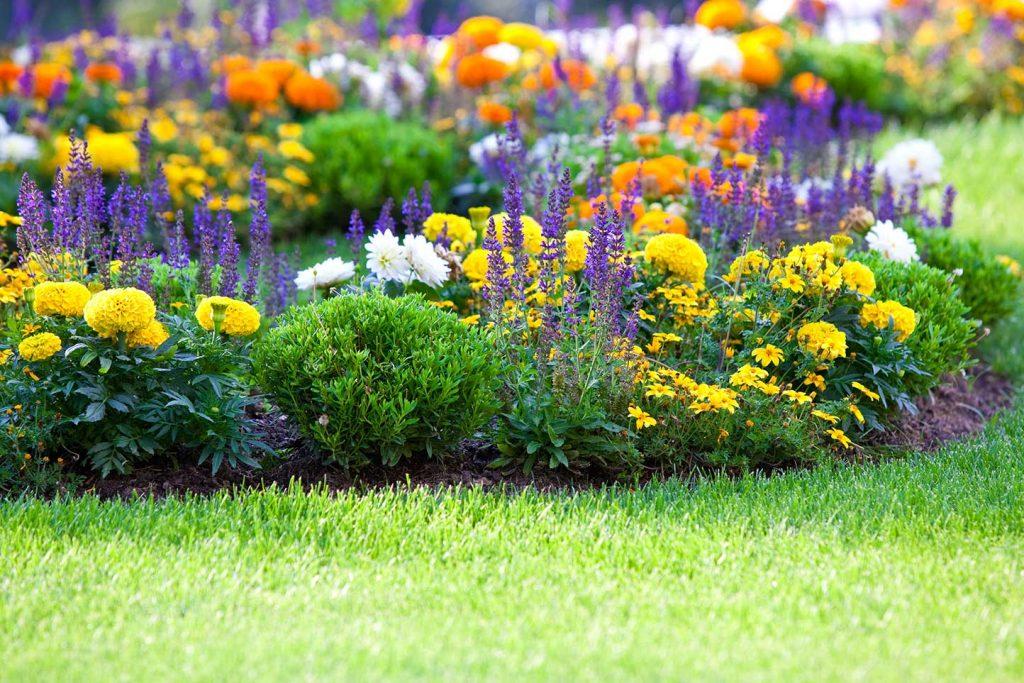 Fiori e piante ornamentali mogliano veneto pistollato for Fiori ornamentali