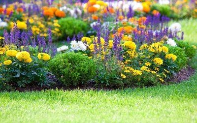 Fiori e piante ornamentali