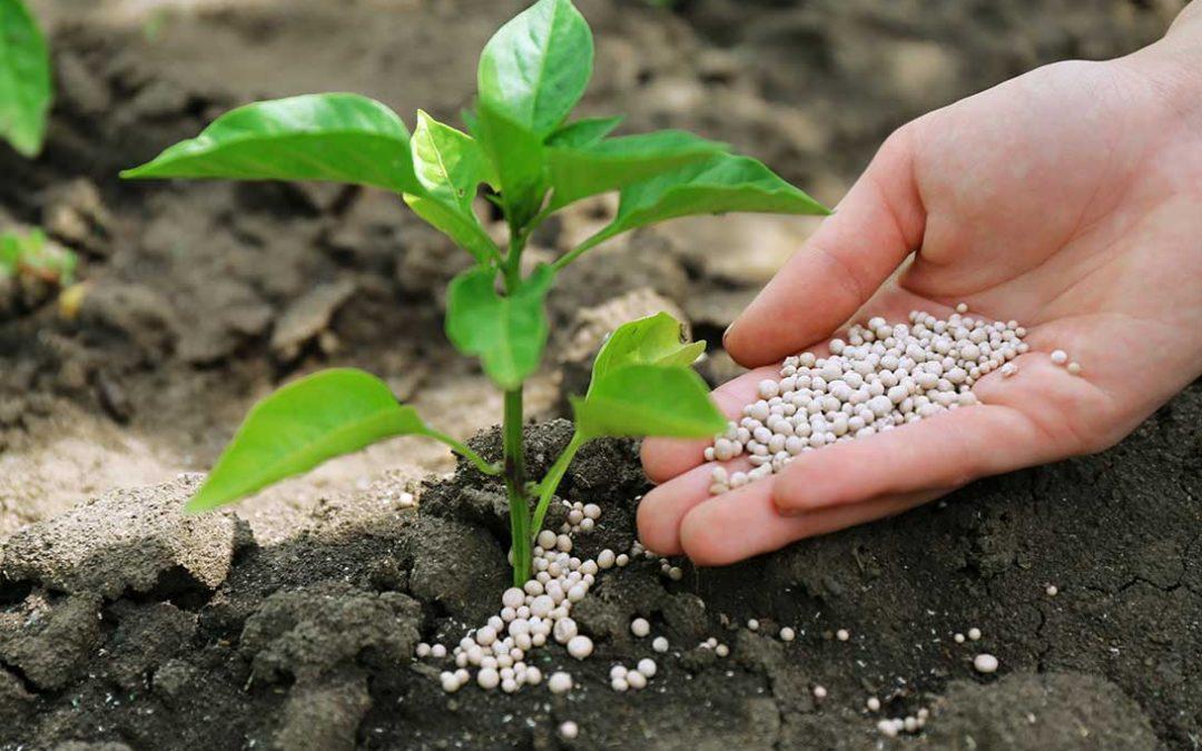concime piante ornamentali e orticole