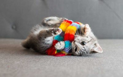 Accessori e giochi gatto