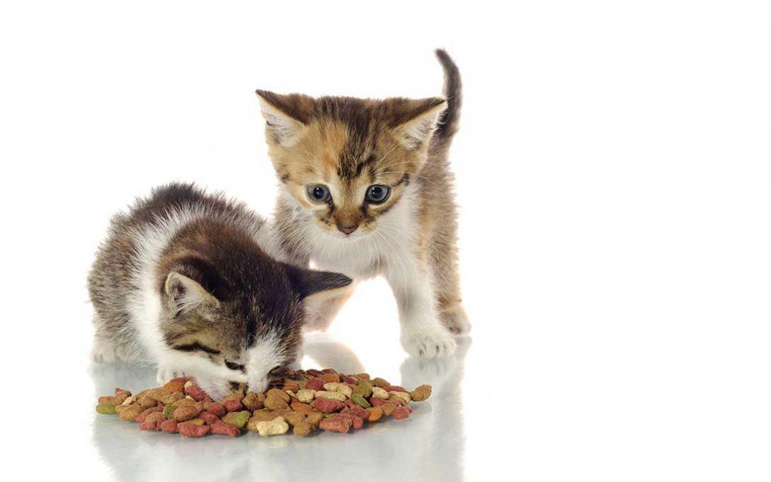 Mangime gatto secco e umido