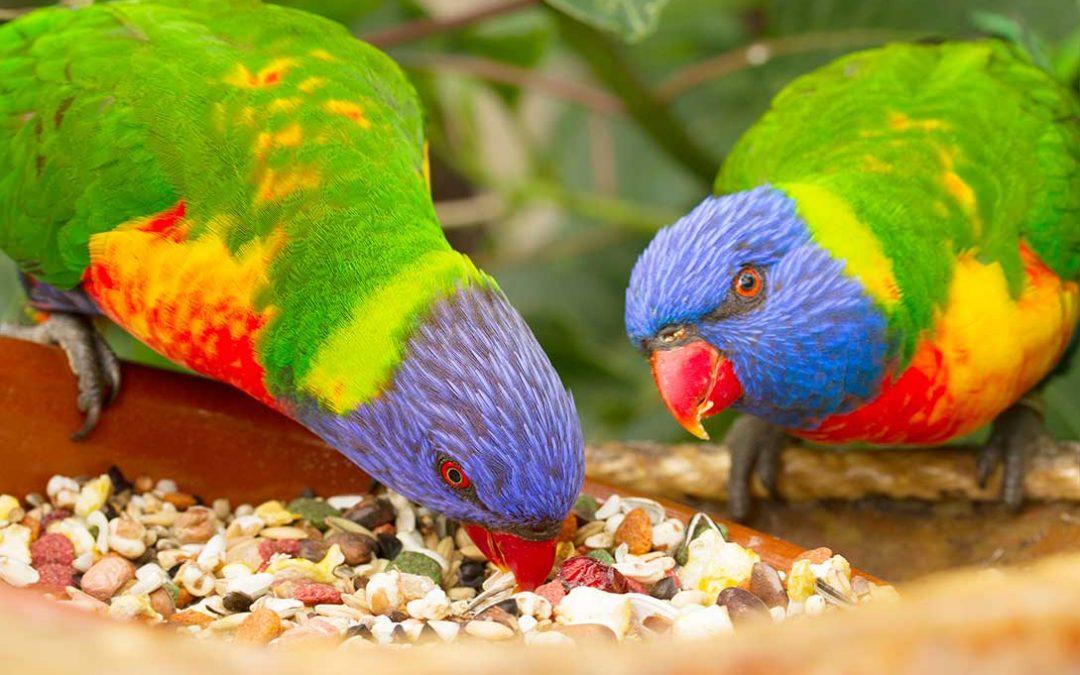 Mangimi per ornitologia e snacks