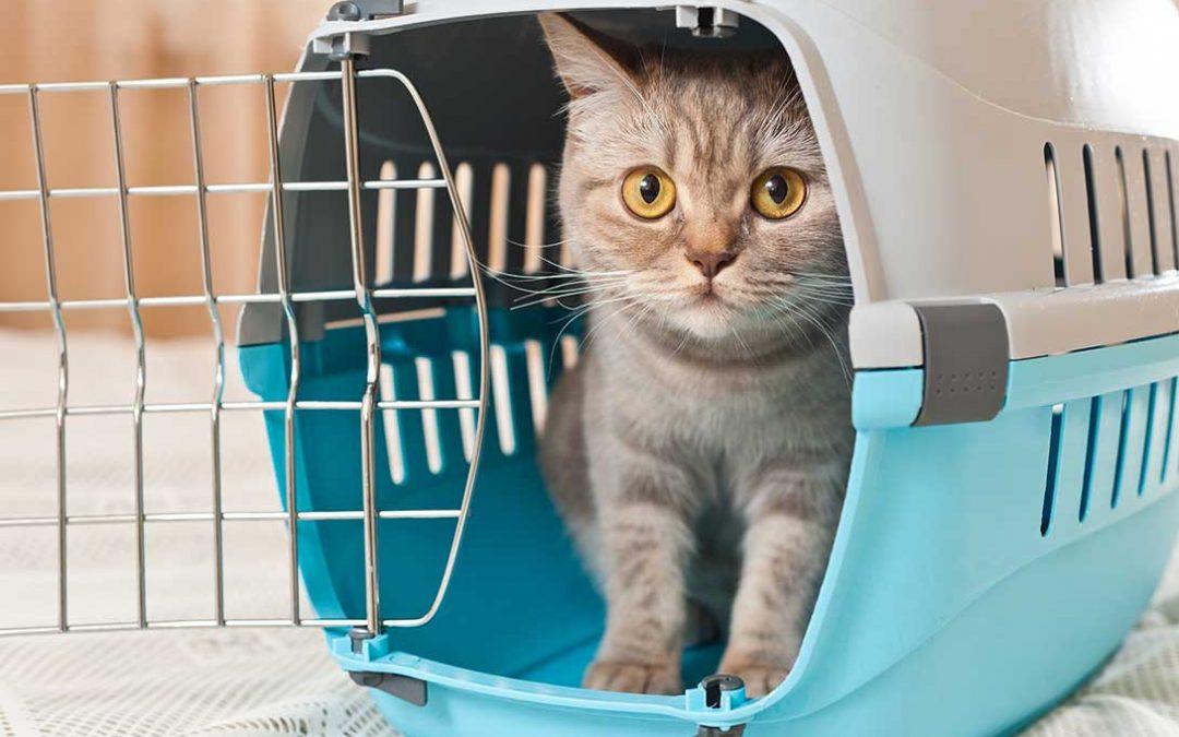 trasportini gatto
