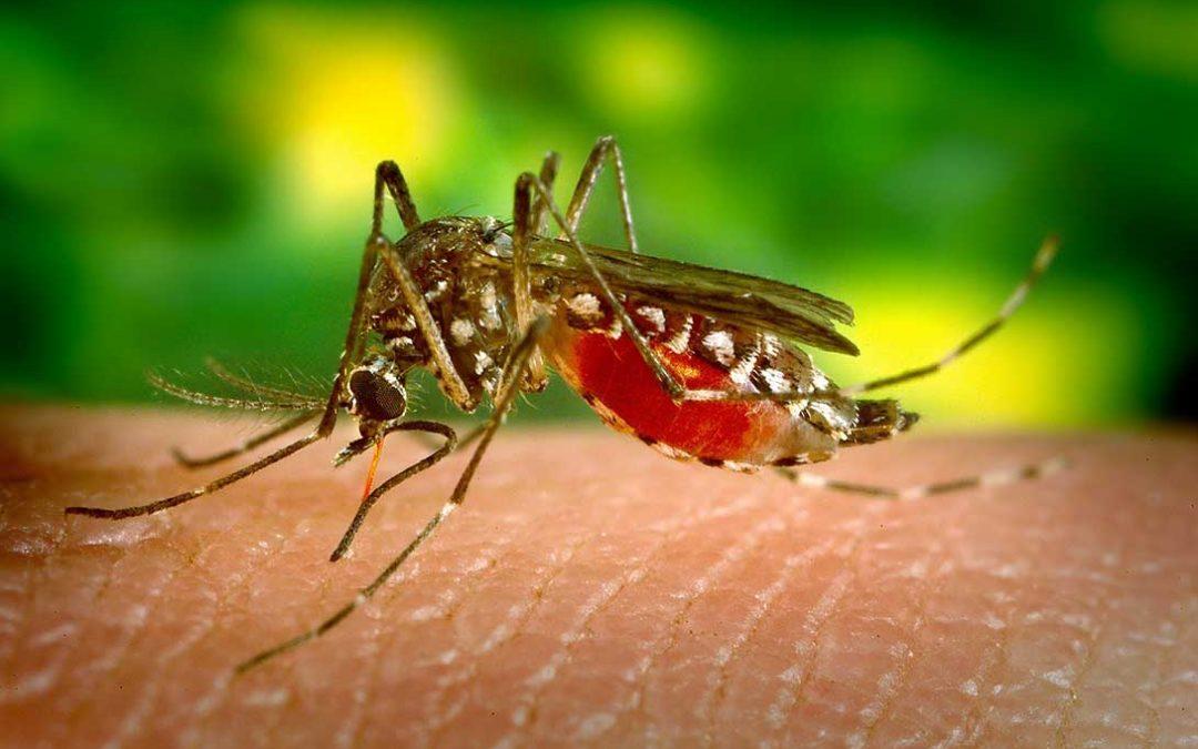 insetticidi e larvicidi per zanzare