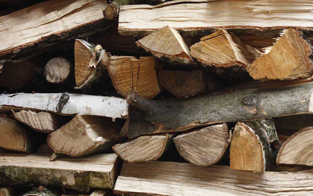 legna di carpino da ardere