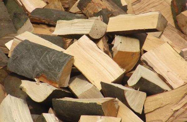 legno di faggio da ardere